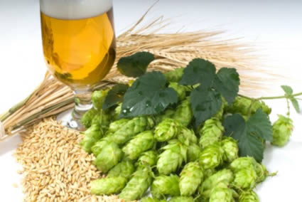 Craft beer - hops and grain